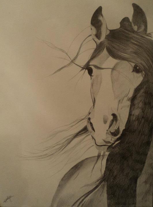 Cavalos No Papel Hipismo Co